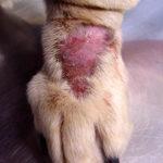 Diagnosing Your Pet's Skin Problems