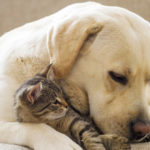 Adorn Your Pets With Top Pets Accessories