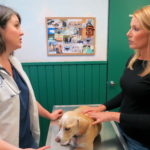 Allergic Dermatitis in Small Animals