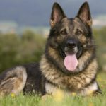 Best Significant Tips While Buying Designer Dog Beds For Large And Small Dogs