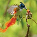 Birdhouses More Popular Than Ever