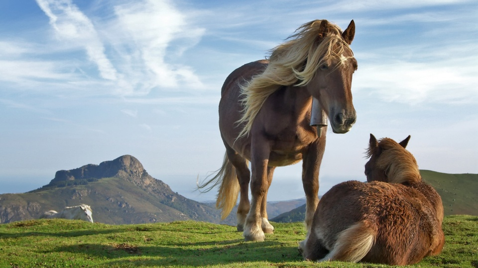 Choosing a Vet For Your Horse