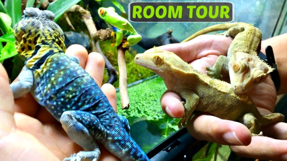 Endangered Rainforest Animals In the Amazon Jungle