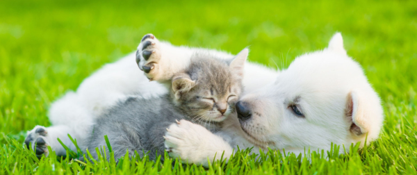 Have You Chosen The Best For Your Pet? - Go On A Spree On-Line