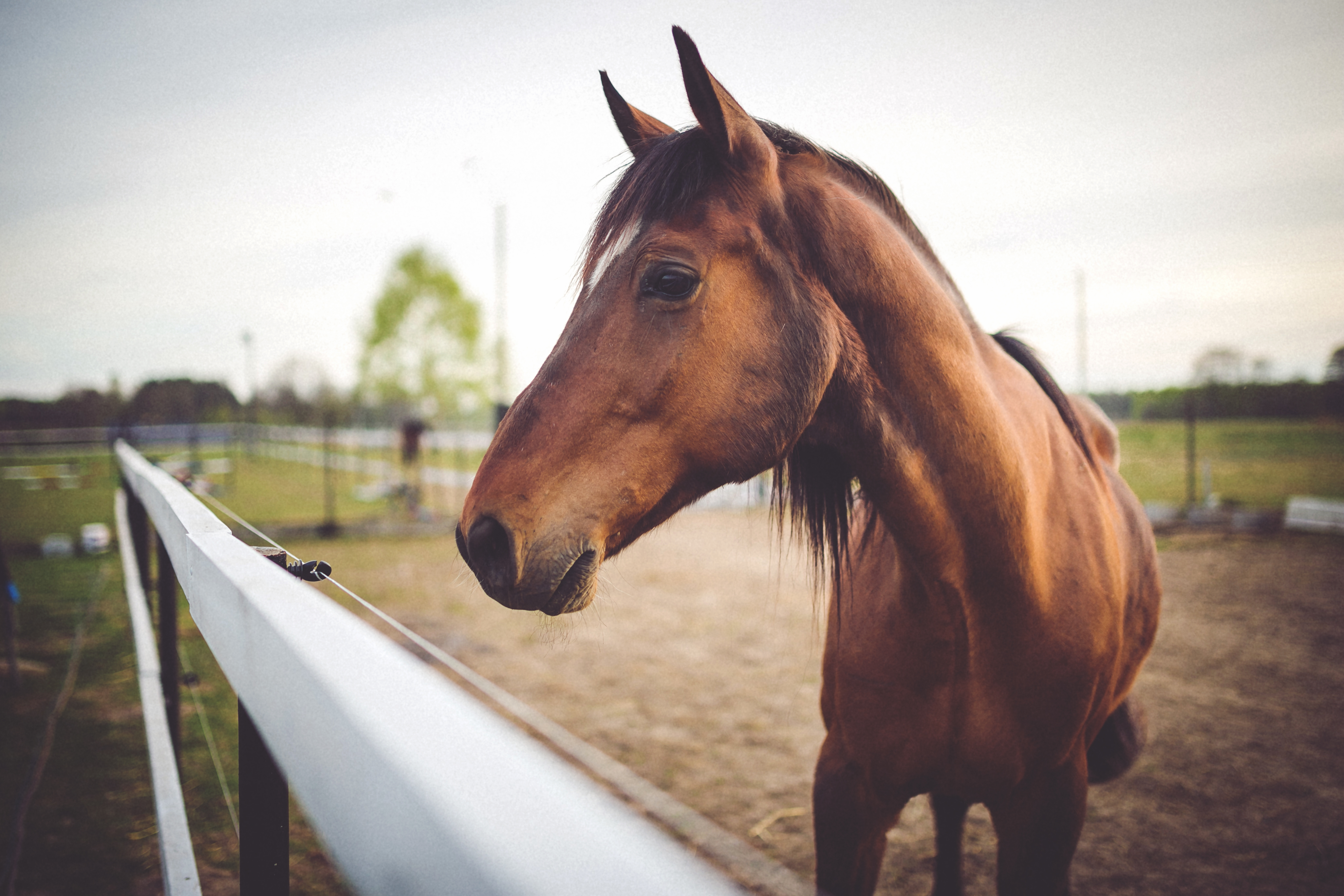 Information Regarding The Tendons And Ligaments of Horses