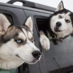 Large Dog Muzzle - Basket Muzzle is the Best Option for Your Large Dog!
