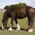 Leather Vs Nylon Horse Halters