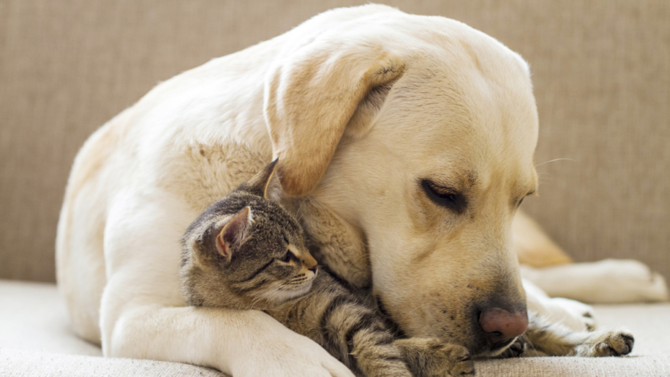 Low Cost Pet Vaccinations in Houston Makes Pet Healthcare Easier
