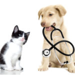 Managing Allergies To Cats-3 Effective Management Strategies