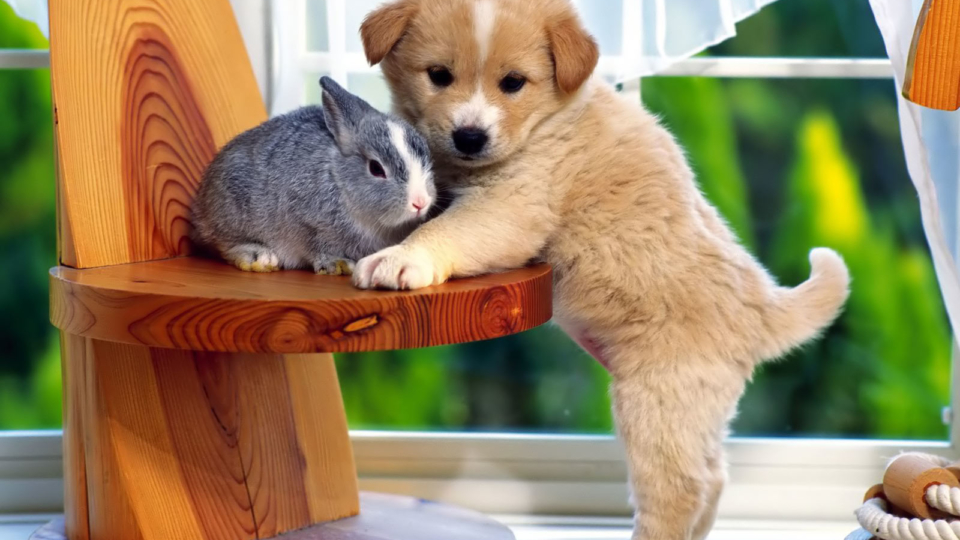 Pet Supplies Online For Your Pet And Your Convenience