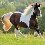Schooling Horses For Beginners