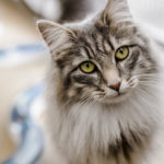 Seeking Advice About Cats? Look Here For Great Tips!
