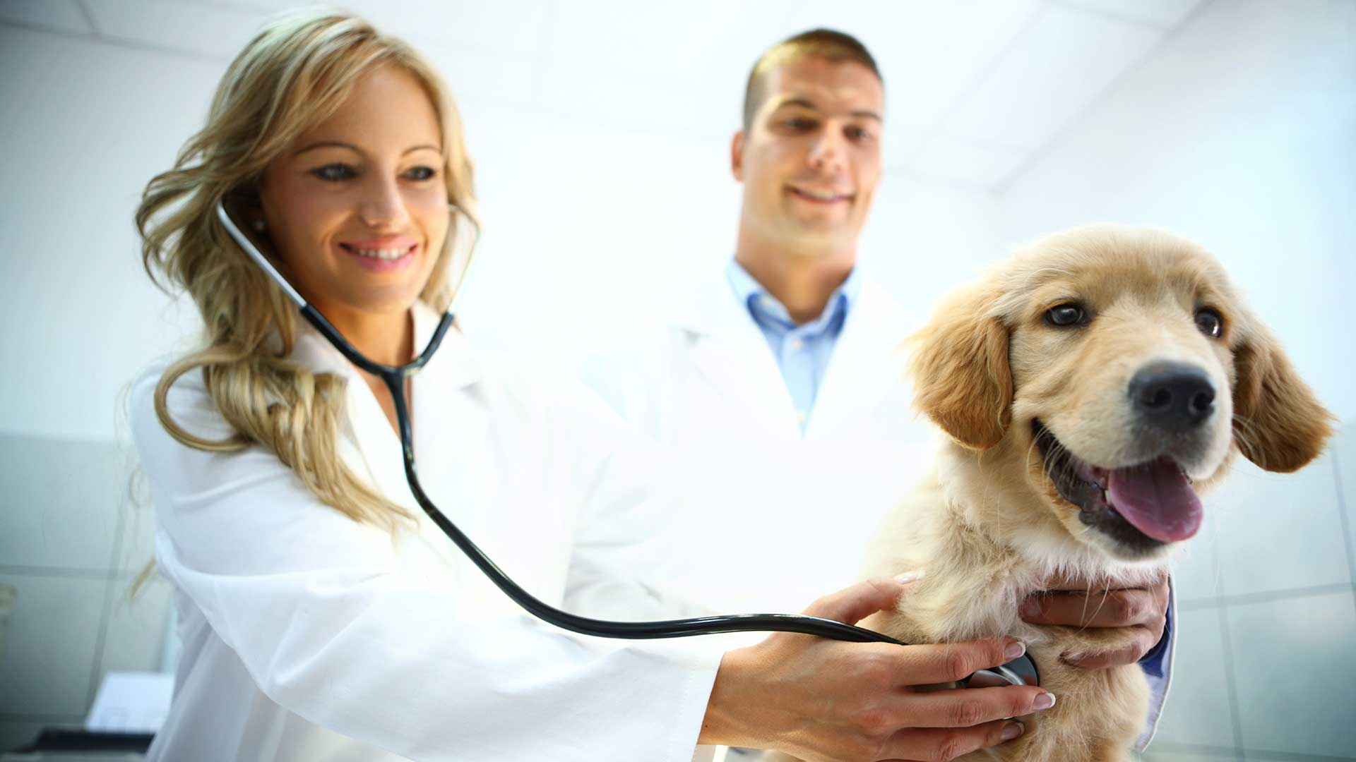 The Growing Popularity of Vitamins For Dogs