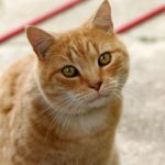 The Way To Raise Your Travel Knowledge About a Cat