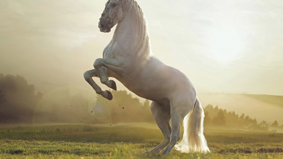 Train Your Horse The Natural Way