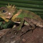 Tropical Rainforest Food Chain