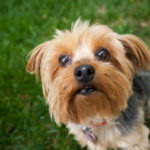 Ultimate Destination For Buying Pet Products And Choosing Perfect Mate For Your Pet