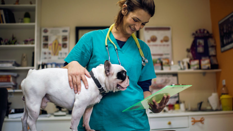Tips for Working with an Emergency Vet