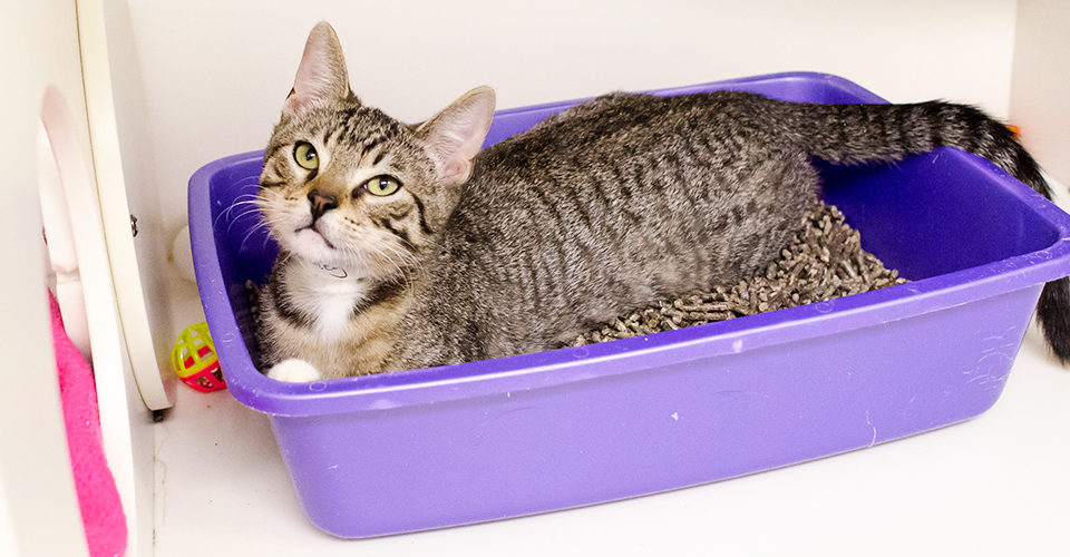 Things to consider when purchasing cat litter boxes