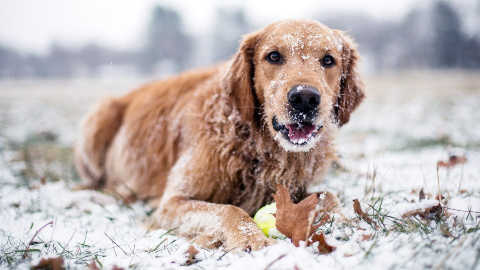 Snow or No Snow- Get Outside This Winter with Your Dog