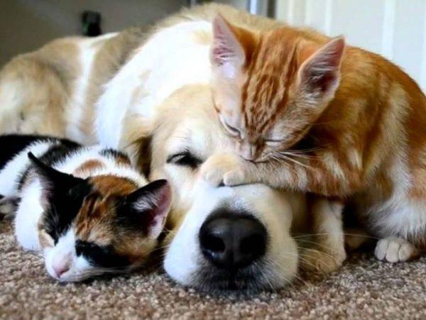 Natural Dog Joint Health Supplement – Velvet Antler