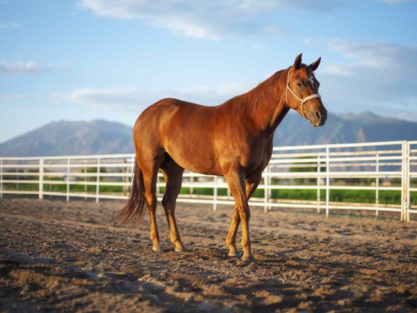 7 Of The Friendliest Horse Breeds For Young Children