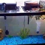 Get Suitable filters for 55-gallon aquarium