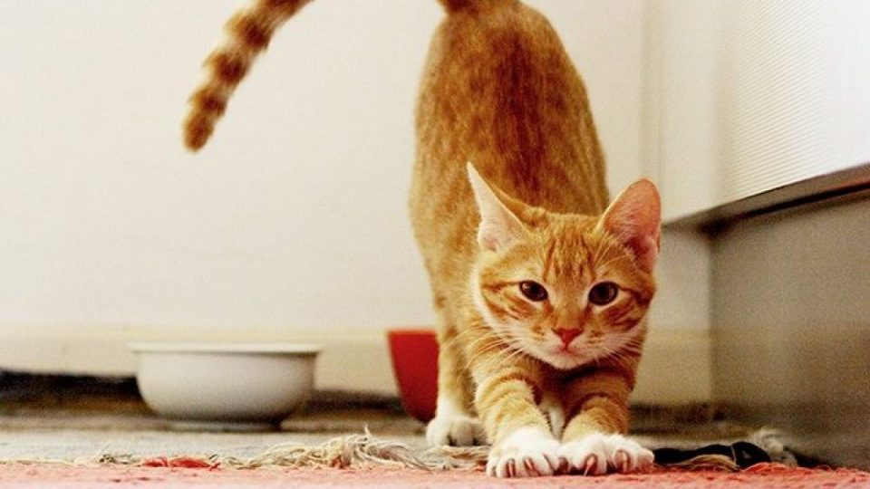 Common Cat Myths Debunked