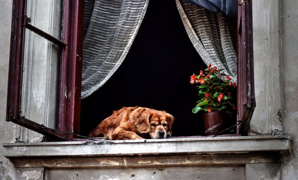 How to Care for Your Senior Dog During COVID-19 Lockdown
