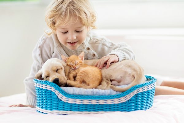 Easy Access to Quality Pet Foods in Australia