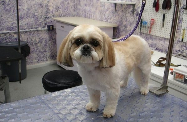 What to ask a professional dog groomer when hiring them?