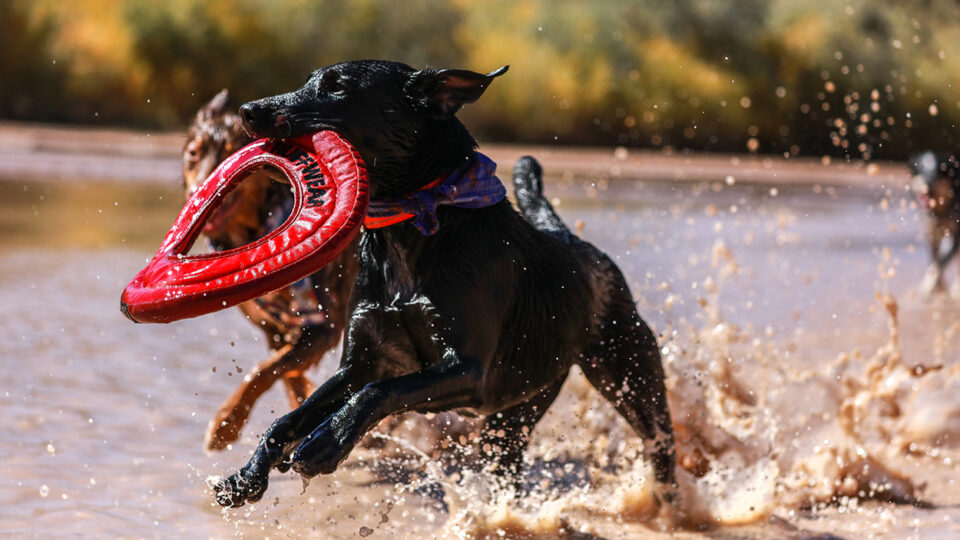 Best Outlet for Pet Care in Australia